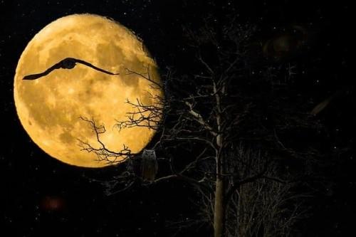 fondo-con-luna.jpg